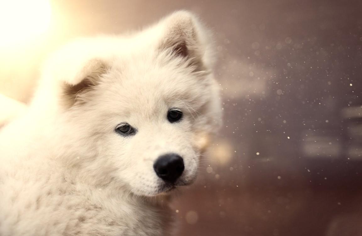 Pies – najlepszy przyjaciel introwertyka?